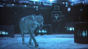 Timberwolves Background 4